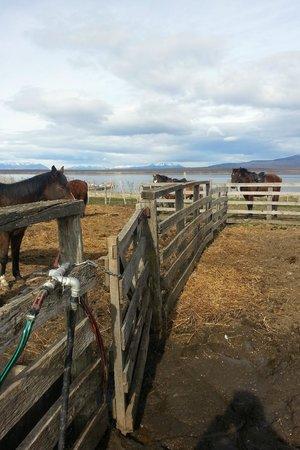 Hotel Bories House: Horses
