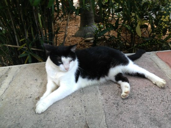 The Galleon Resort And Marina: Six Toed Cat at Hemingway's