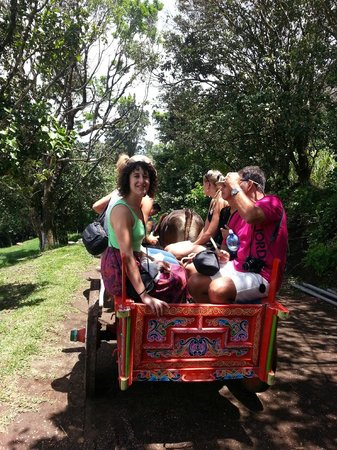 El Trapiche Tour: ox cart ride