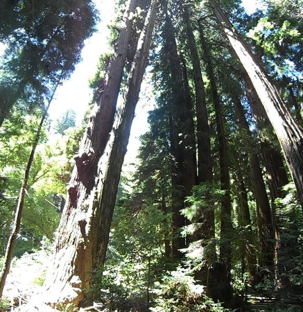 A Friend in Town Tours : Majestic redwoods in Muir Woods
