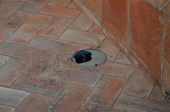 Hotel Carlos Astorga : Entretien du site hôtelier