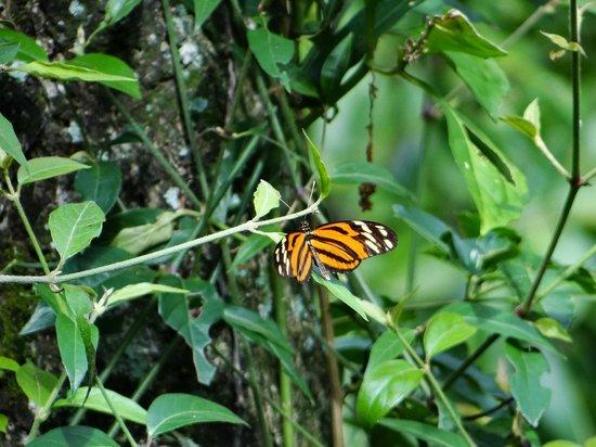 Hacienda Guachipelin: butterfly