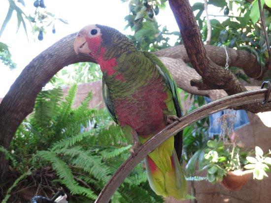 Hostal Ida: Le perroquet