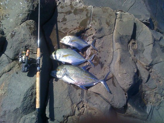 Trio bluefin trevally picture of maui shore fishing for Shore fishing maui