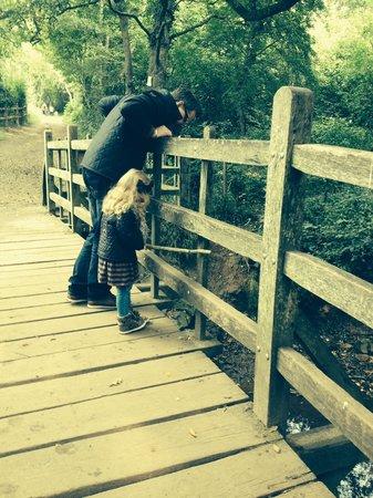 Pooh Corner: At pooh bridge