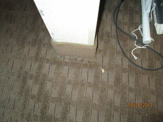Red Roof Inn Tucson North - Marana : more filth left my housekeeping