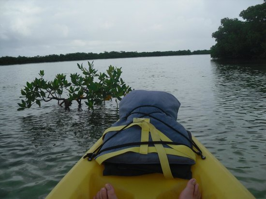 Key West Eco Tours: Mangroves
