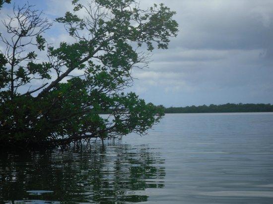 Key West Eco Tours: Mangroves