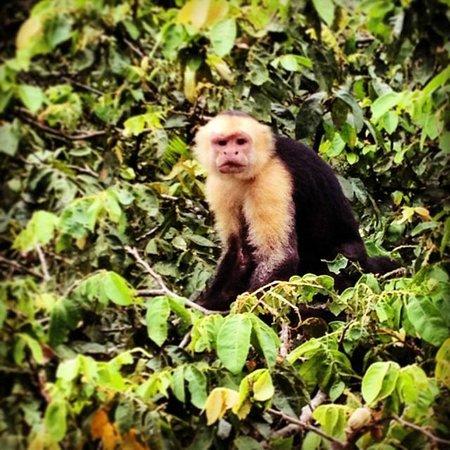 Kingdom Tours: Up close with a monkey