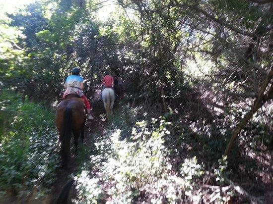 Ironwood Ranch : riding through the brush