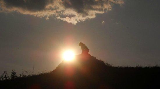 Oberbinder: gatto al tramonto