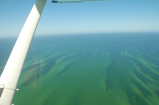 Flight Excursions Private Tours: Colors of the Bay