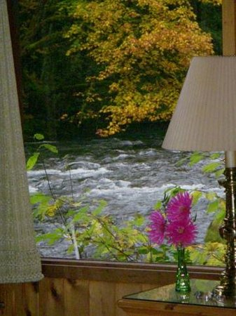 Cedarwood Lodge: View out the side window in autumn