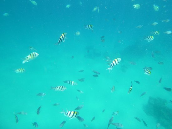 Kahe Point Beach Park: fishies!