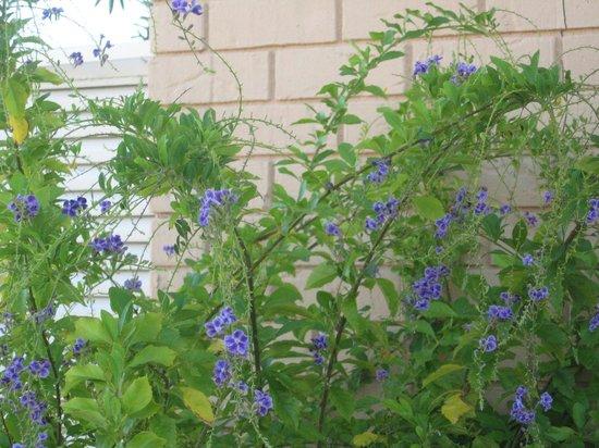 Hotel Monteleone: More flora