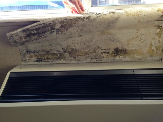 The Lord Nelson Hotel & Suites : Mold on wall