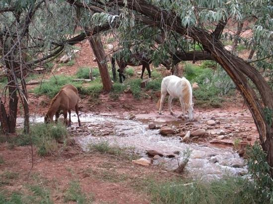 Red Cliffs Lodge: horses at a stream