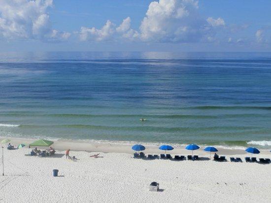 Osprey on the Gulf: Beautiful beach