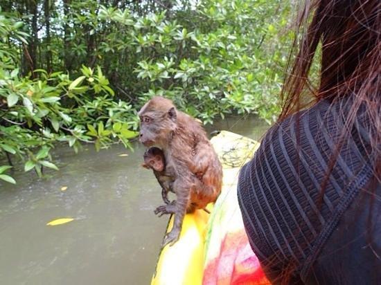 Krabi Kayak: Looking for a food