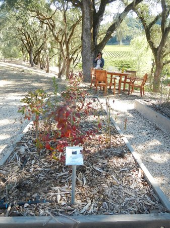 Healdsburg Wine Tours : organic garden and a table for two