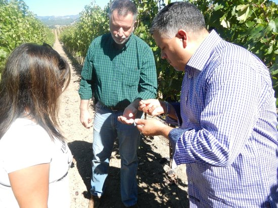 Healdsburg Wine Tours: learning about wine alchemy