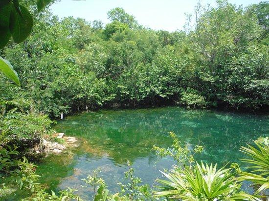 พลายาเดลคาร์เมน, เม็กซิโก: Open Cenote
