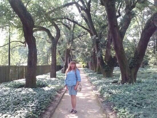 Hopelands Gardens: Beautiful tree lined walkways