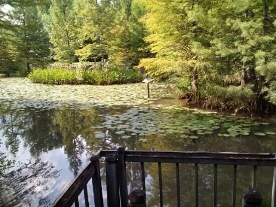 Hopelands Gardens: Serene ponds