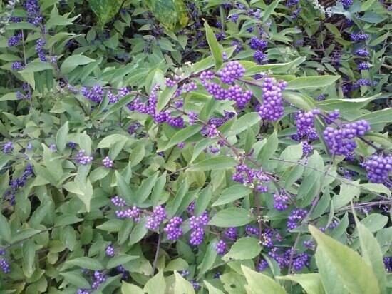 Hopelands Gardens: Flowers everywhere