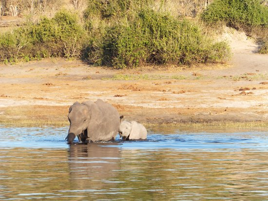 The Old House: elephants started swimming
