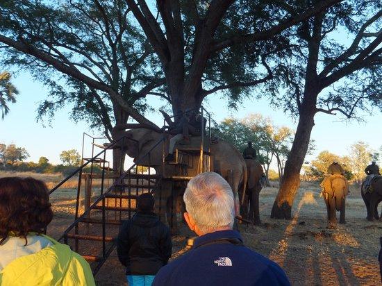 The Villa Victoria : Elephant back ride