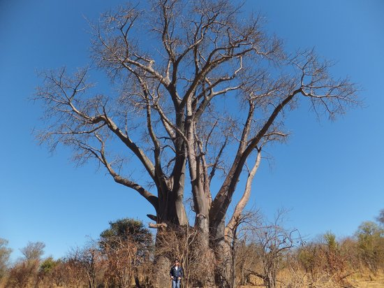 The Villa Victoria: Walked to see Big Tree - Baobab