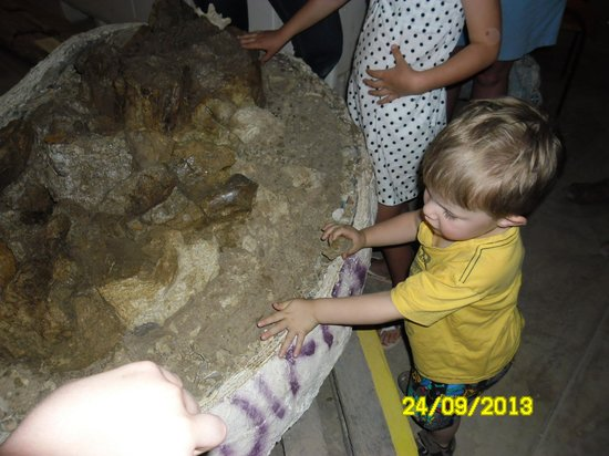 touching a real dinosaur bone picture of australian age of