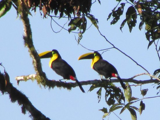 Maquipucuna Reserve & Ecolodge: We were fortunate enough to see Toucans, among the many other amazing birds we encountered.