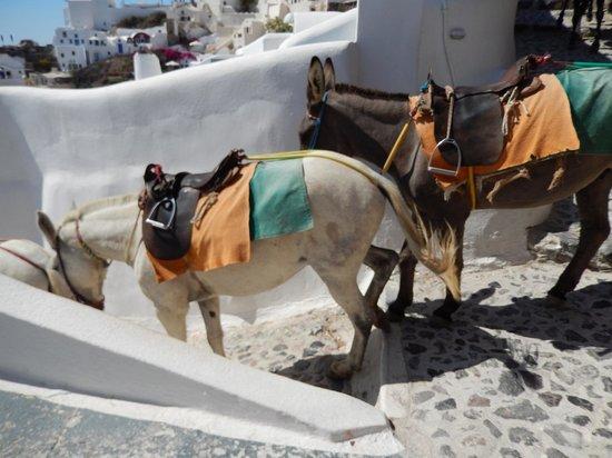 "Caldera Villas: Mules and donkeys descending the public ""street"" to the sea."