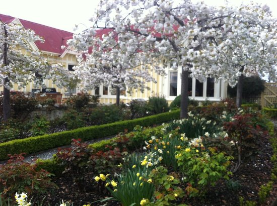 Pen-y-bryn Lodge: Cherry blossoms and spring bulbs
