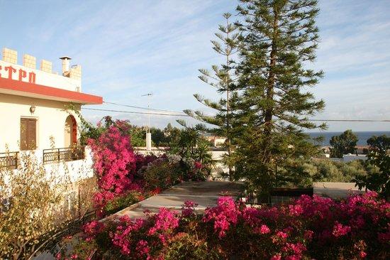 Kastro Apartments Crete: Flowers around