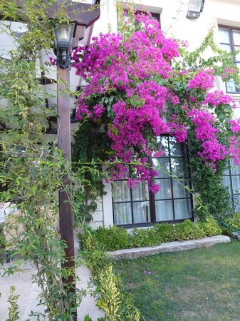 Imren Han Hotel & Mansions: The garden