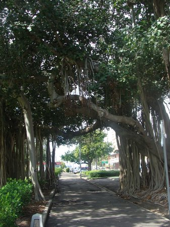 The Strand: Cool trees
