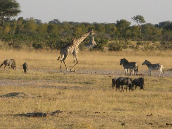 Hwange Main Camp: From the viewing tower at the water hole