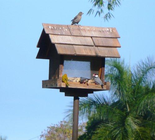 Hale Maluhia Country Inn (house of peace) Kona: Casina per volatili