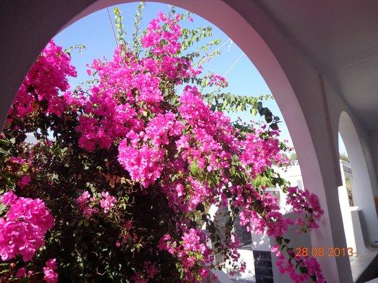 Hotel Anemones: balcony view