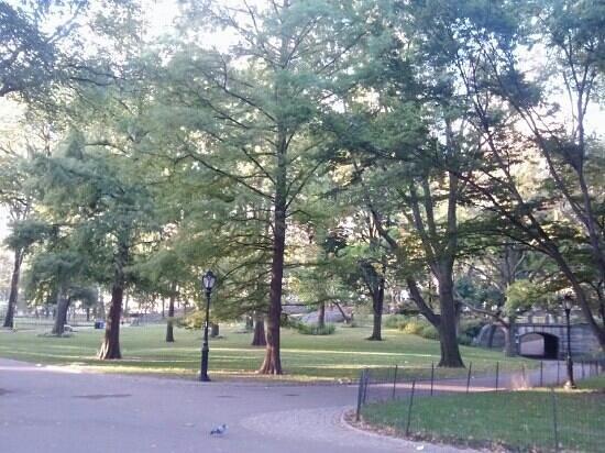 เซ็นทรัลปาร์ค: central park