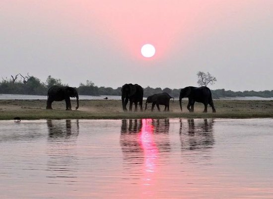 Ichingo Chobe River Lodge - Zambezi Queen Collection : éléphants au coucher du soleil