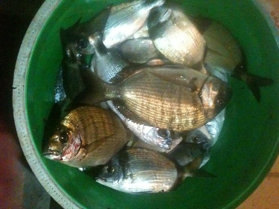 Kapetanios Seafood Restaurant: FRESH FISHES