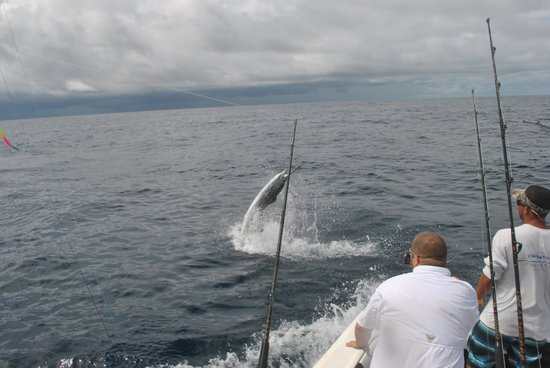 Wetass II Sportfishing : Jumper!