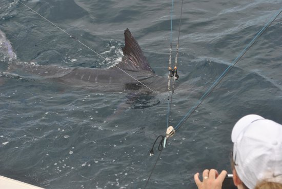 Wetass II Sportfishing : Sailfish
