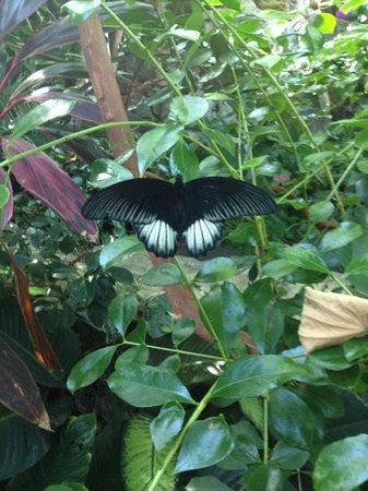 Sachs Butterfly House: Pretty butterfly