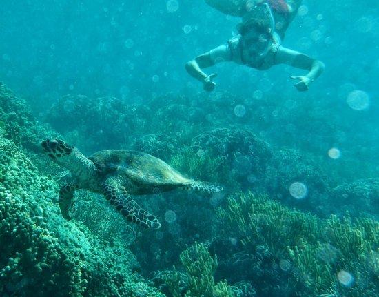 Kanawa Island Resort: Buceando en el arrecife de la isla