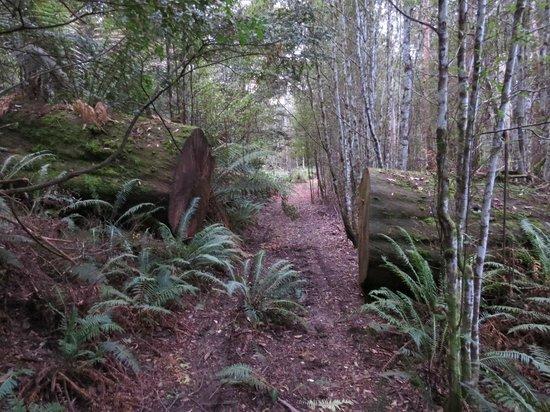 Forest Walks Lodge: Rainforest